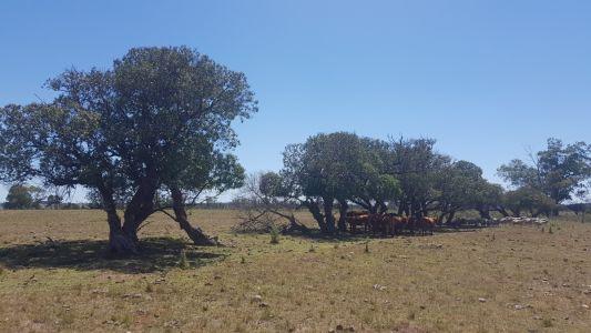 Chacra en Zona Rural - Zona Rural