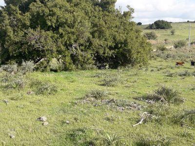 Campo en Garzon - ideal para uso de descanso - Consulte!!!!