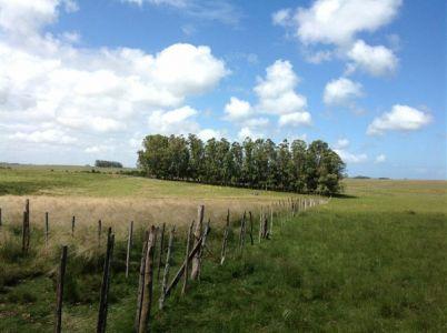 Campo 41 has en Garzon del lado del mar, campo. turistico