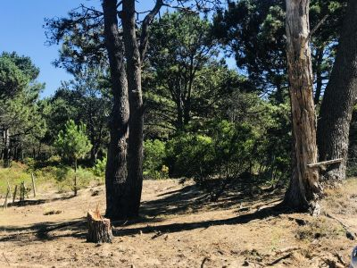Venta Precioso terreno en Manantiales entre el bosque y el mar